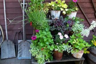 Outdoor kitchen container gardening